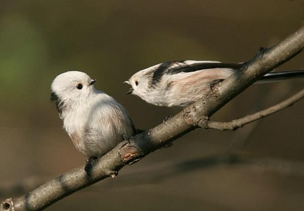 funny-birds-40-photos- (24)