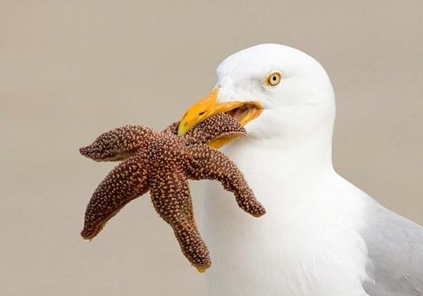 funny-birds-40-photos- (27)
