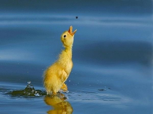 funny-birds-40-photos- (29)