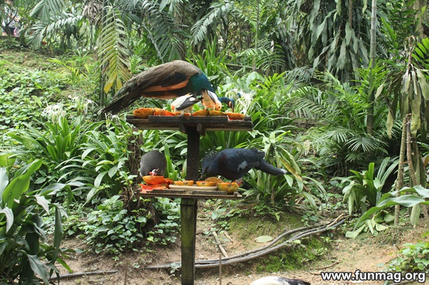 kl-bird-park-best-things-to-see-in-kuala-lumpur- (30)