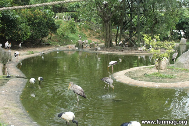 kl-bird-park-best-things-to-see-in-kuala-lumpur- (58)