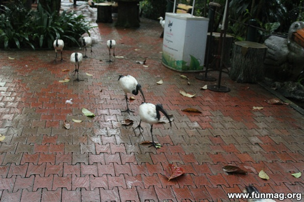 kl-bird-park-best-things-to-see-in-kuala-lumpur- (67)