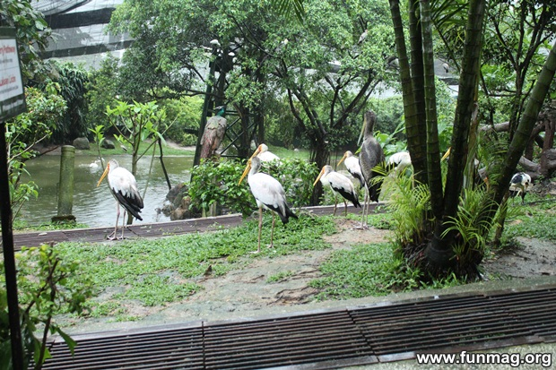 kl-bird-park-best-things-to-see-in-kuala-lumpur- (71)