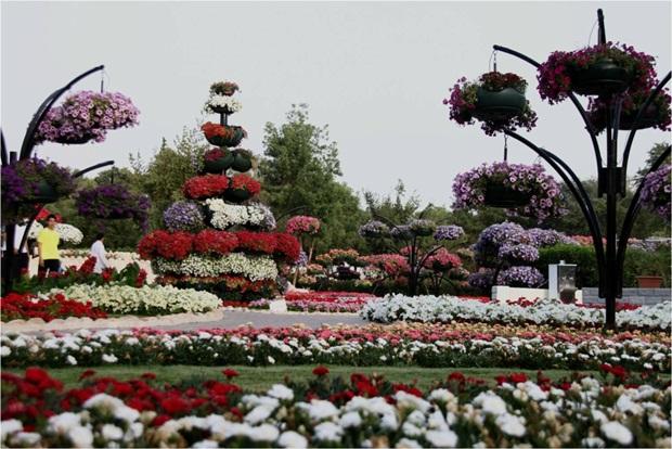 al-ain-paraidse-beautiful-flowers-park- (15)