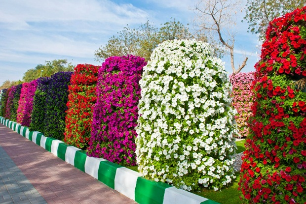 al-ain-paraidse-beautiful-flowers-park- (2)