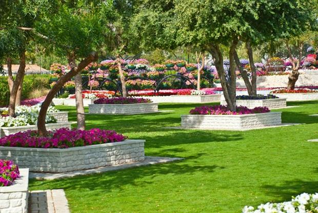 al-ain-paraidse-beautiful-flowers-park- (5)