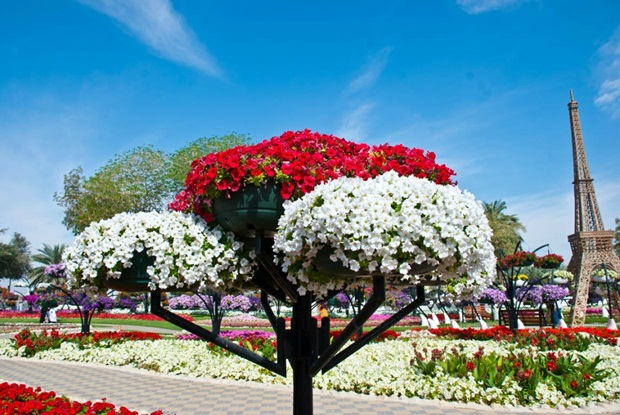 al-ain-paraidse-beautiful-flowers-park- (7)