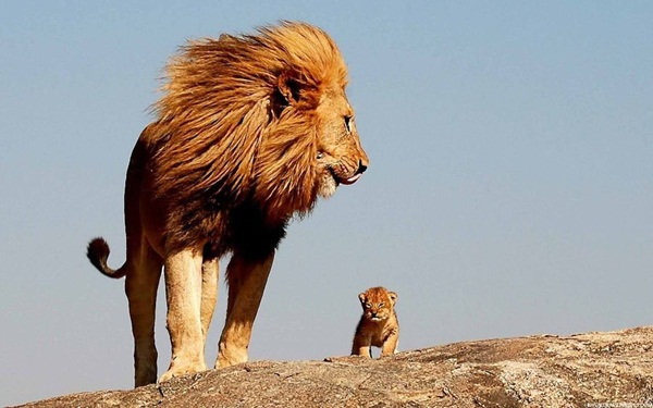 baby-animals-with-their-parents- (24)