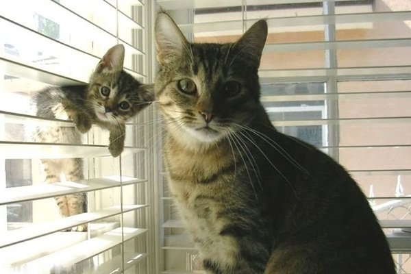 baby-animals-with-their-parents- (32)