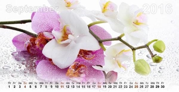 flowers-calendar-2016- (9)