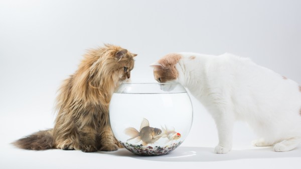 cute-cats-wallpaper-20-photos- (12)