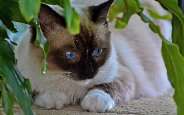 cute-cats-wallpaper-20-photos- (16)