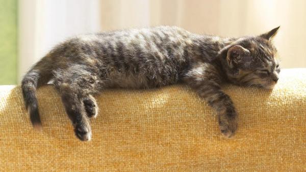cute-cats-wallpaper-20-photos- (18)
