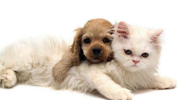 cute-cats-wallpaper-20-photos- (7)