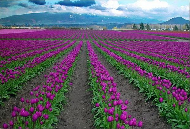 field-of-flowers- (14)