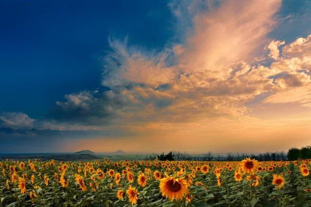 field-of-flowers- (15)