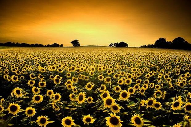 field-of-flowers- (16)