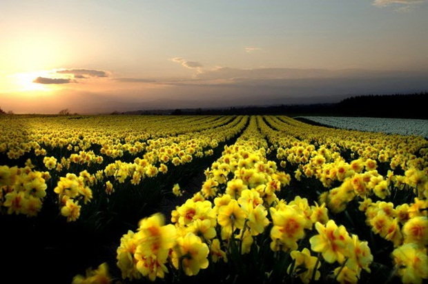 field-of-flowers- (17)
