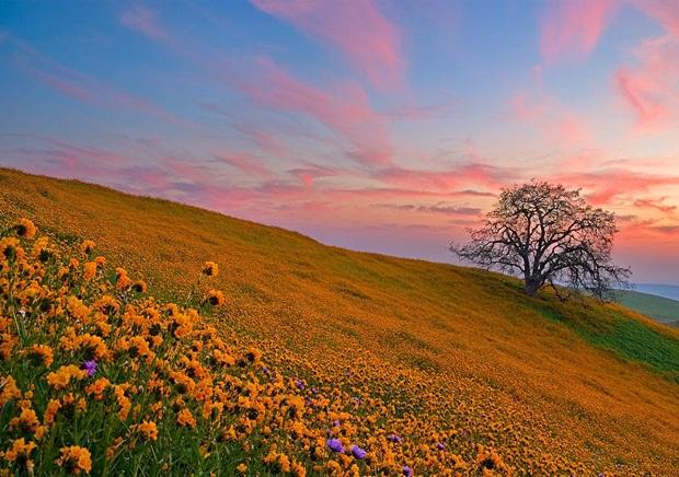 field-of-flowers- (2)