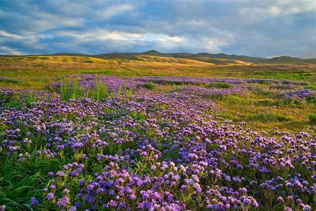 field-of-flowers- (35)
