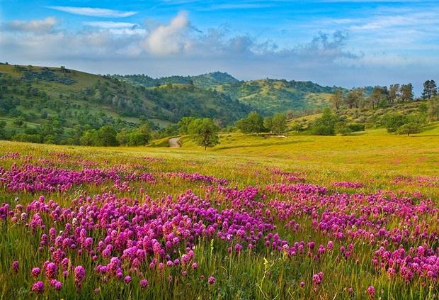 field-of-flowers- (38)