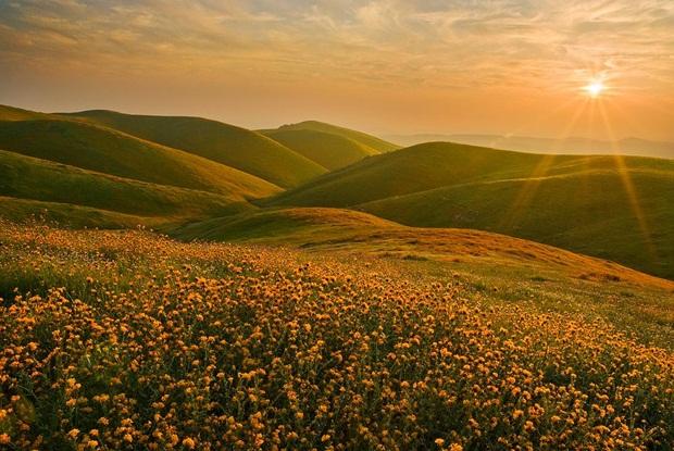 field-of-flowers- (5)