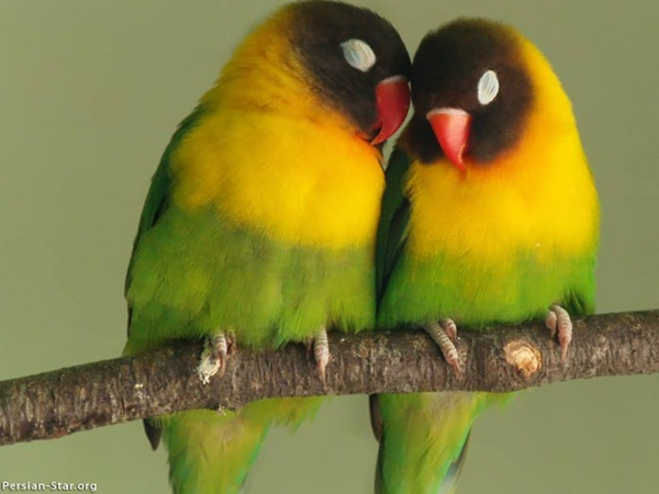 most-beautiful-birds-in-the-world-37-photos- (1)