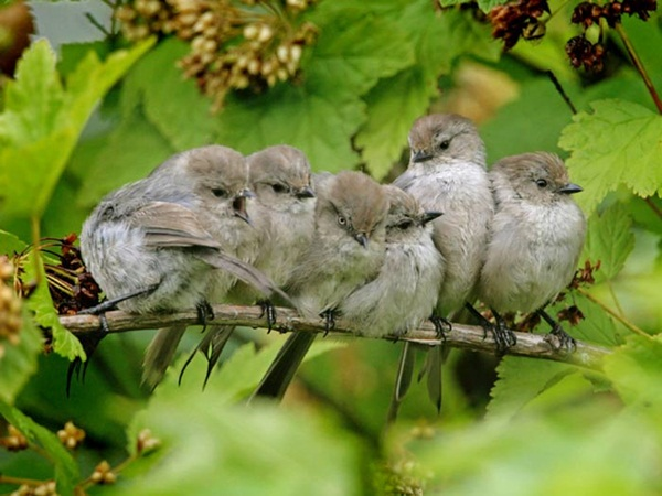 most-beautiful-birds-in-the-world-37-photos- (3)