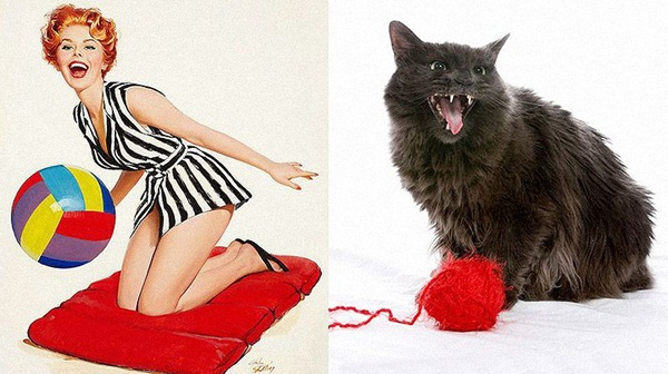 cats-imitate-the-girls- (7)