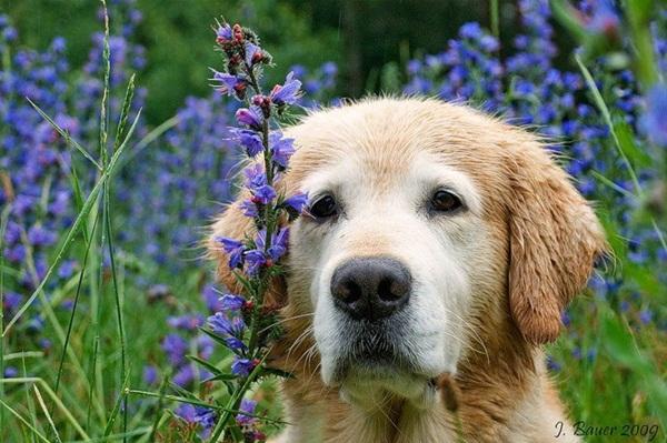 dogs-in-flowers- (13)