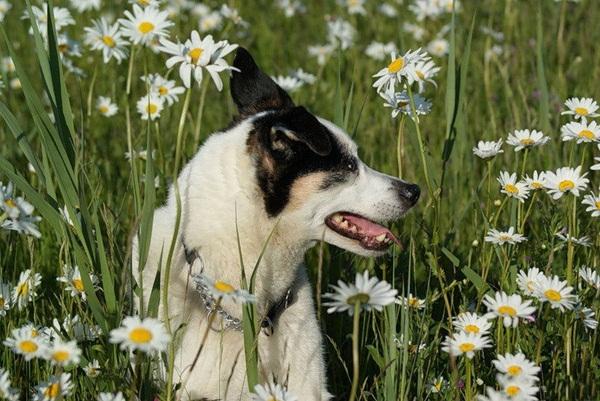 dogs-in-flowers- (15)