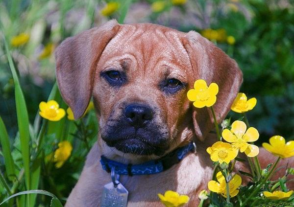 dogs-in-flowers- (17)