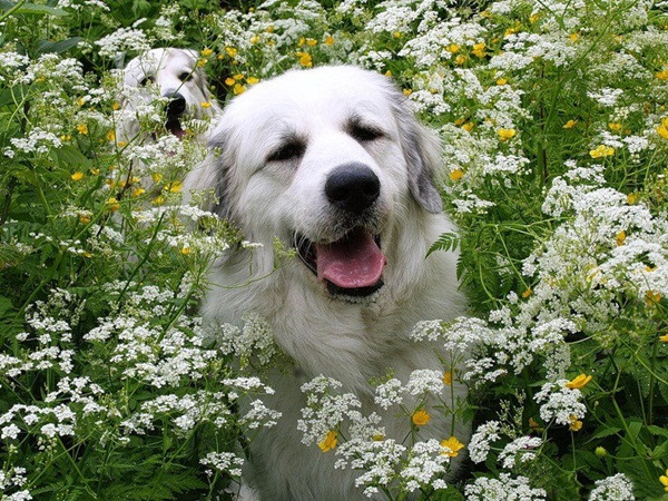 dogs-in-flowers- (4)