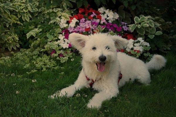 dogs-in-flowers- (5)