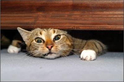funny-cats-25-photos- (10)