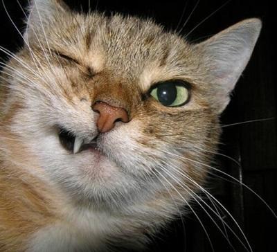 funny-cats-25-photos- (12)