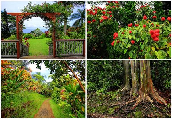 maui-gardens- (1)