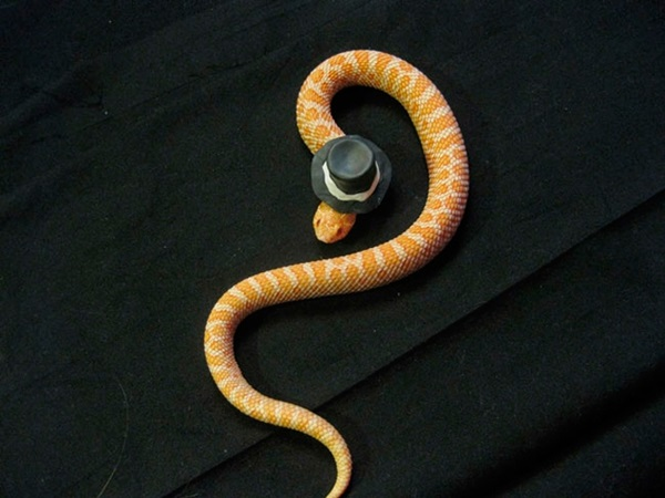 snakes-in-hats- (10)