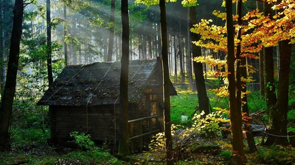 wood-house- (20)