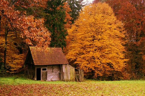 wood-house- (4)