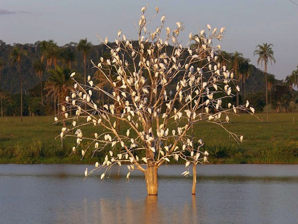 birds-on-tree- (14)