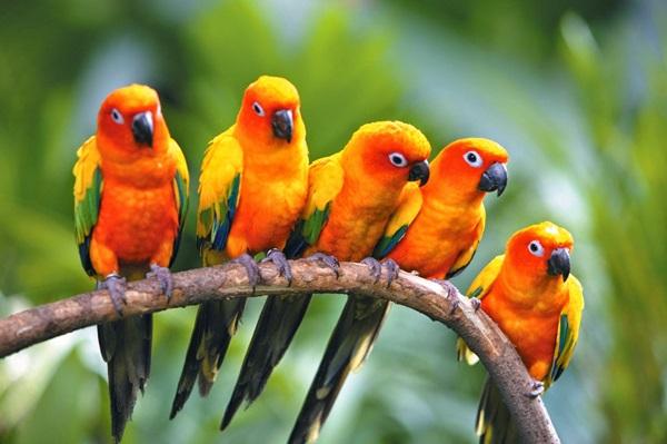 birds-on-tree- (18)