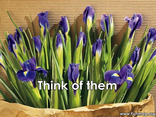 friends-are-like-flowers-friendship-cards- (13)