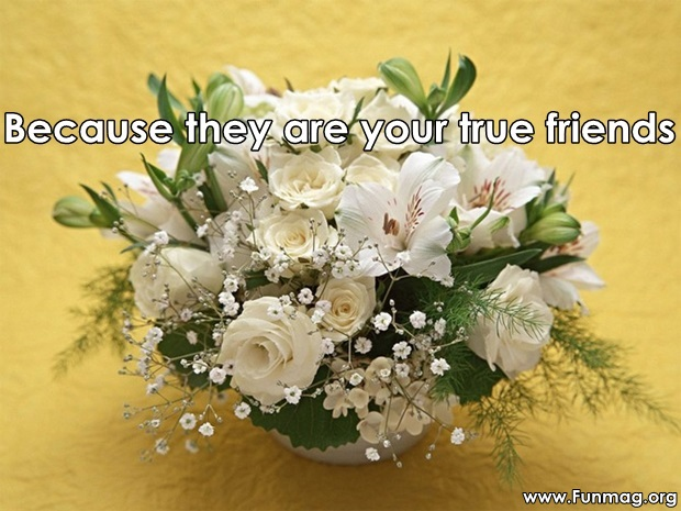 friends-are-like-flowers-friendship-cards- (19)