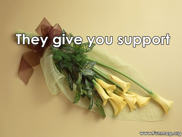 friends-are-like-flowers-friendship-cards- (9)