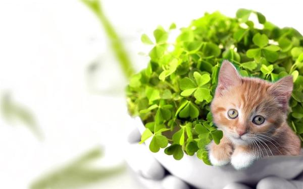 kitten-wallpaper- (12)