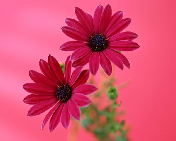 most-beautiful-flowers-40-photos- (2)