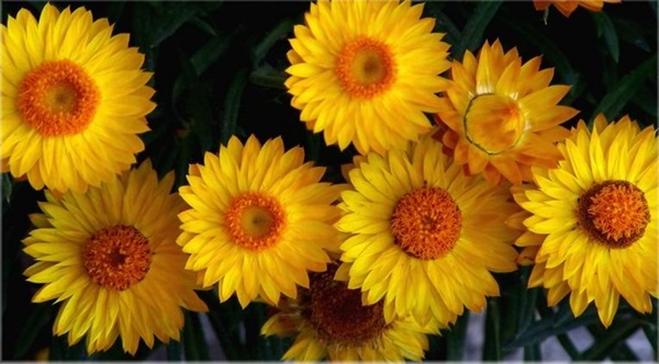 most-beautiful-flowers-40-photos- (21)