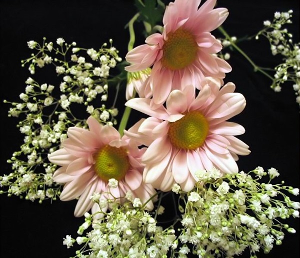 most-beautiful-flowers-40-photos- (33)