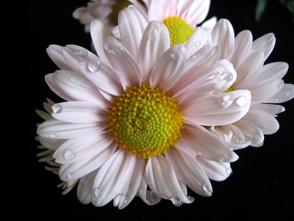 most-beautiful-flowers-40-photos- (34)